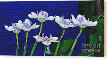 Dainty White Irises All In A Row Wood Print by Kaye Menner