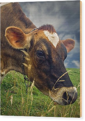 Dairy Cow Eating Grass Wood Print by Bob Orsillo