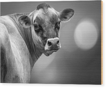 Dairy Cow Elsie Wood Print by Bob Orsillo