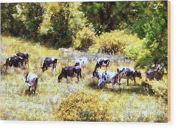 Dairy Cows In A Summer Pasture Wood Print by Janine Riley