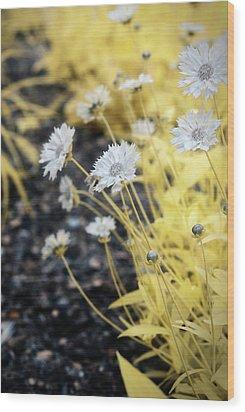 Daisey Wood Print by Paul Seymour