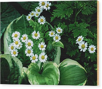 Daisies And Hosta In Colour Wood Print