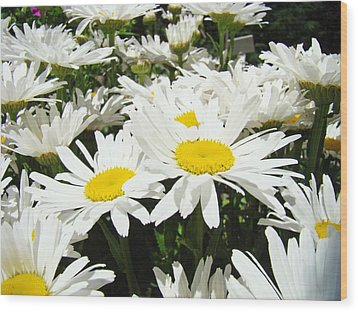 Daisies Floral Landscape Art Prints Daisy Flowers Baslee Troutman Wood Print by Baslee Troutman