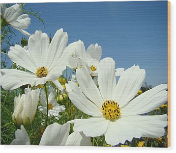 Daisies Flowers Art Prints White Daisy Flower Gardens Wood Print by Baslee Troutman