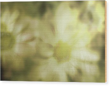 Wood Print featuring the photograph Daisies by Gray  Artus