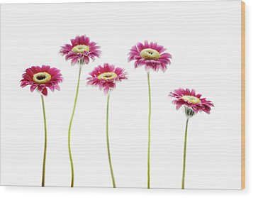 Wood Print featuring the photograph Daisies In A Row by Rebecca Cozart