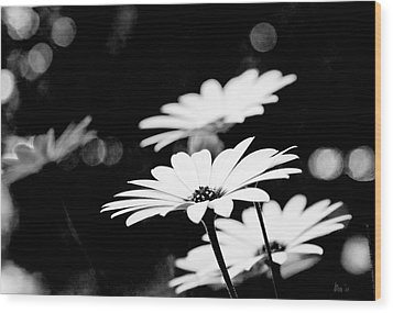 Daisies In Black And White Wood Print