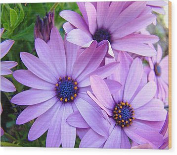 Daisies Lavender Purple Daisy Flowers Baslee Troutman Wood Print by Baslee Troutman