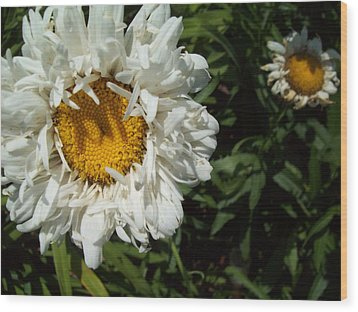 Wood Print featuring the photograph Daisy 2 by Robin Coaker