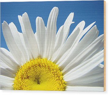 Daisy Art Prints White Daisies Flowers Blue Sky Wood Print by Baslee Troutman