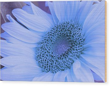 Daisy Blue Wood Print by Marie Leslie