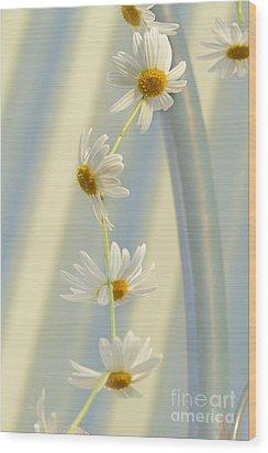 Daisy Chain Wood Print by Elaine Teague