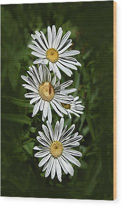 Daisy Chain Wood Print by Marie Leslie