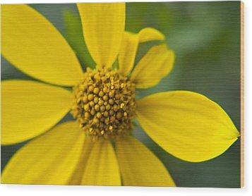 Wood Print featuring the photograph Daisy Daisy by Daniel Hebard