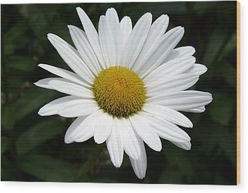 Wood Print featuring the photograph Daisy Daisy by Tim Mattox