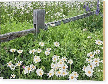 Daisy Fence Wood Print by Susan Cole Kelly