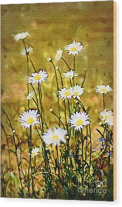 Wood Print featuring the photograph Daisy Field by Donna Bentley