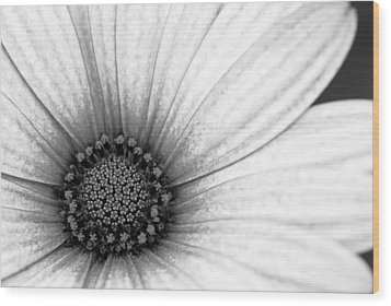 Daisy Flower Wood Print by Fraser Davidson