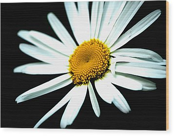 Wood Print featuring the photograph Daisy Flower - White Sun by Alexander Senin