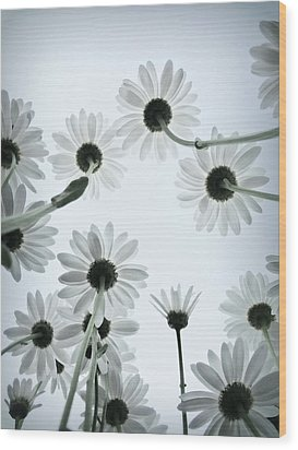 Daisy Flowers Rear View Wood Print by photograph by Anastasiya Fursova