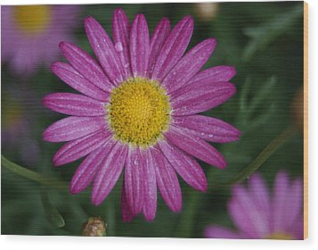 Wood Print featuring the photograph Daisy by Heidi Poulin