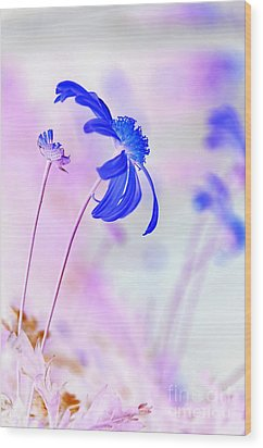 Daisy In Blue Wood Print by Kaye Menner