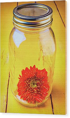 Daisy In Glass Jar Wood Print by Garry Gay