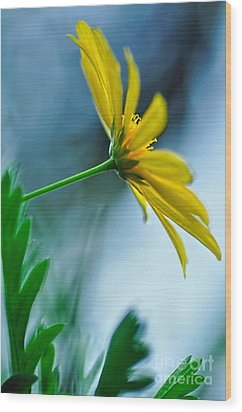 Daisy In The Breeze Wood Print by Kaye Menner