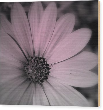 Wood Print featuring the photograph Daisy by Laura DAddona