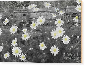 Wood Print featuring the photograph Daisy Patch by Benanne Stiens
