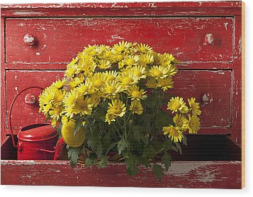 Daisy Plant In Drawers Wood Print