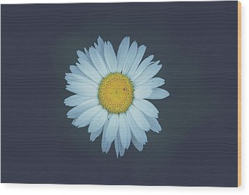 Wood Print featuring the photograph Daisy  by Shane Holsclaw