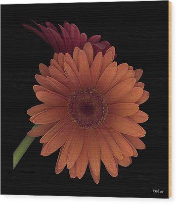 Daisy Tilt Wood Print by Heather Kirk