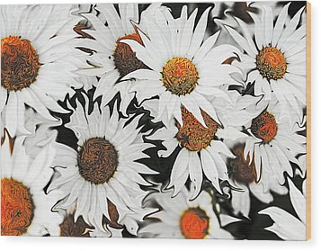 Daisy With A Twist Wood Print