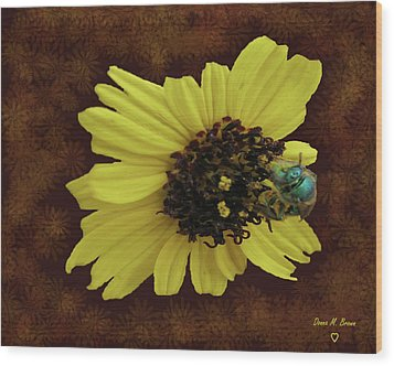 Wood Print featuring the photograph Daisy With Bee  by Donna Brown