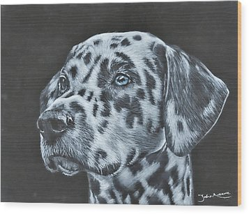 Dalmation Portrait Wood Print