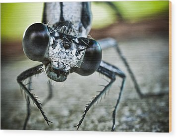 Damselfly In Late Summer Wood Print by Ryan Kelly