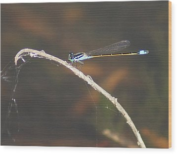 Wood Print featuring the photograph Damselfly by Lynda Dawson-Youngclaus