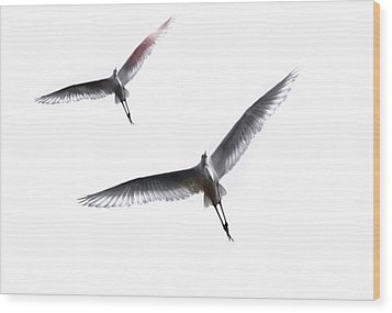Wood Print featuring the photograph Dance Of The Egrets by Marion Cullen