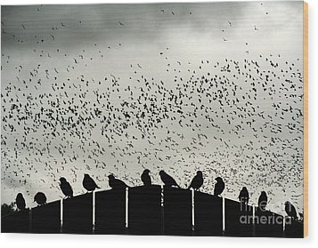Wood Print featuring the photograph Dance Of The Migration by Jan Piller