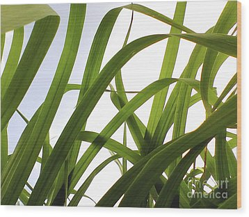Dancing Bamboo Wood Print by Rebecca Harman