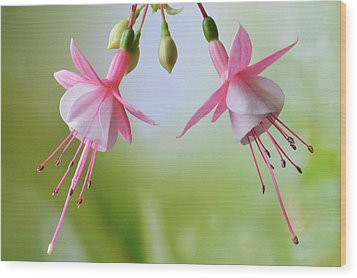 Wood Print featuring the photograph Dancing Fuchsia by Terence Davis