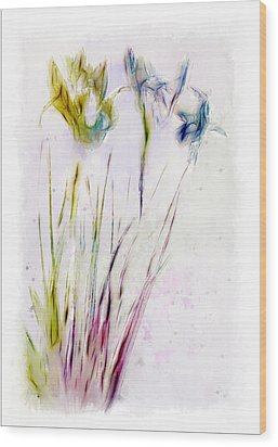Dancing Irises Wood Print by Jill Balsam