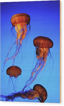 Wood Print featuring the photograph Dancing Jellyfish by Anthony Jones