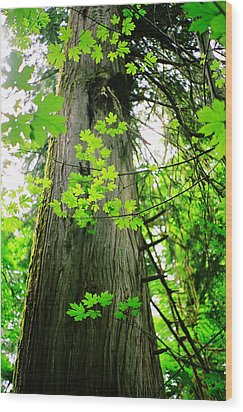 Wood Print featuring the photograph Dancing Leaves by Kathy Bassett