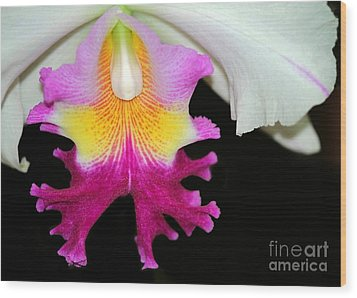 Dancing Orchid Wood Print by Sabrina L Ryan