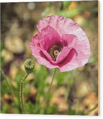 Wood Print featuring the photograph Dancing Pink Poppy by Marion McCristall