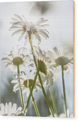Wood Print featuring the photograph Dancing With Daisies by Aaron Aldrich