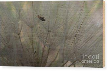 Dandelion 4 Wood Print