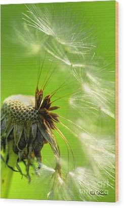 Wood Print featuring the photograph Dandelion by Alana Ranney
